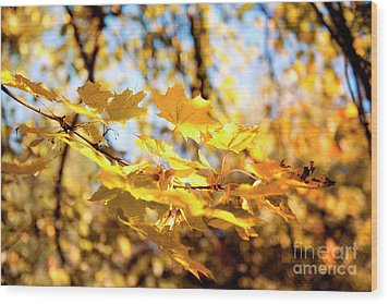 Wood Print featuring the photograph Golden Leaves by Ivy Ho