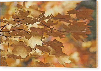 Golden Light Autumn Maple Leaves Wood Print by Jennie Marie Schell