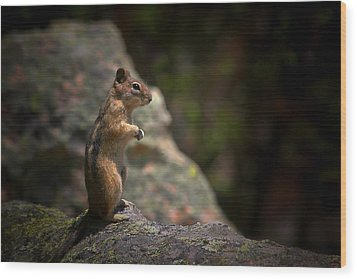Golden Mantled Ground Squirrel Rocky Mountains Colorado Wood Print by Christine Till