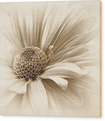 Wood Print featuring the photograph Golden Mist by Darlene Kwiatkowski