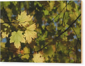 Golden Morning Wood Print by Trish Hale