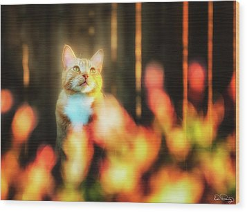 Golden Orange Tabby Wood Print