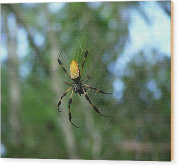 Golden Orb Weaver 1 Wood Print