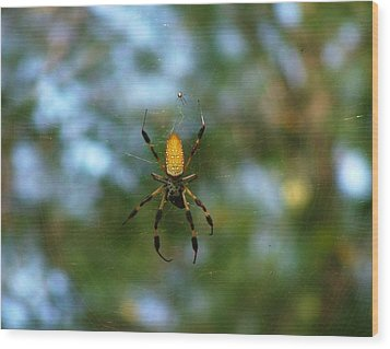 Golden Orb Weaver 2 Wood Print
