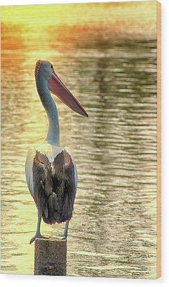 Golden Pelican Wood Print