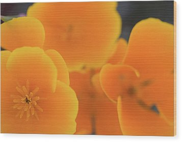 Wood Print featuring the photograph Golden Poppies by Roger Mullenhour