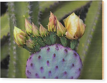 Wood Print featuring the photograph Golden Prickly Pear Buds  by Saija Lehtonen