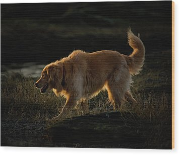 Wood Print featuring the photograph Golden by Randy Hall