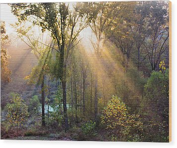 Golden Rays Wood Print by Kristin Elmquist
