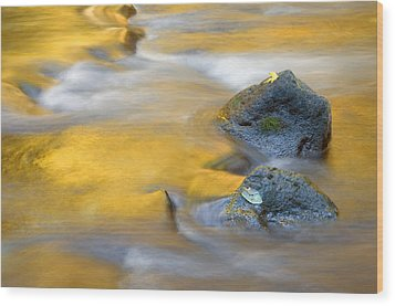 Golden Refuge Wood Print by Mike  Dawson