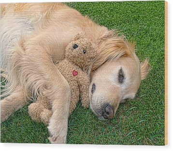 Golden Retriever Dog Teddy Bear Love Wood Print by Jennie Marie Schell