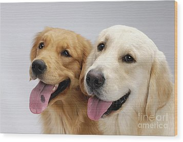 Golden Retrievers Wood Print by Oleksiy Maksymenko