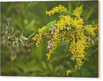 Wood Print featuring the photograph Golden Rod by Elsa Marie Santoro