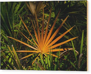 Golden Saw Palmetto Wood Print by John Myers