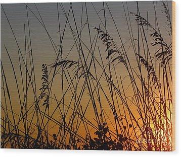 Golden Sea Oats Wood Print by Terri Mills
