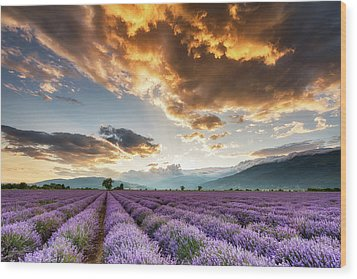 Golden Sky, Violet Earth Wood Print by Evgeni Dinev