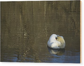 Wood Print featuring the photograph Golden Slumber by Elsa Marie Santoro