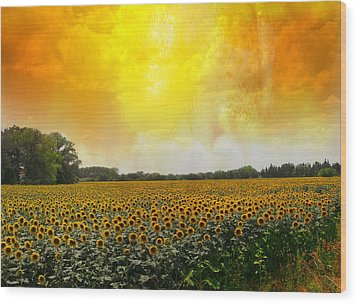 Golden Sunflowers Of Nimes Wood Print