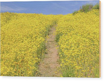 Wood Print featuring the photograph Golden Trail by Marc Crumpler
