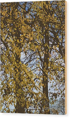 Golden Tree 2 Wood Print by Carol Lynch