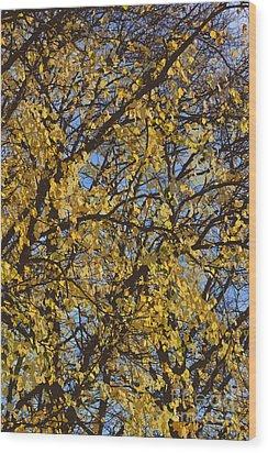 Golden Tree 3 Wood Print by Carol Lynch