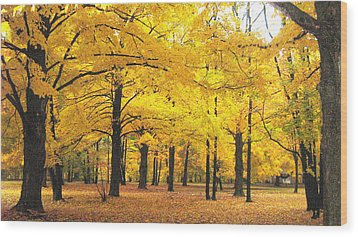 Golden Trees Wood Print