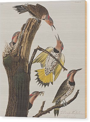 Golden-winged Woodpecker Wood Print by John James Audubon