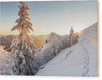 Golden Winter Wood Print by Evgeni Dinev