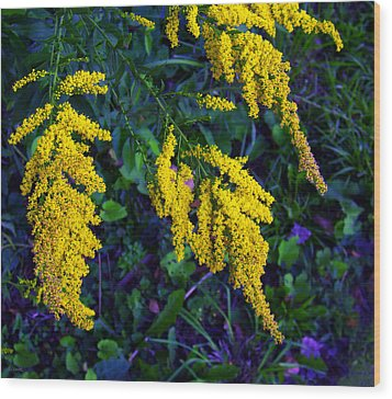 Wood Print featuring the photograph Goldenrod by Shawna Rowe