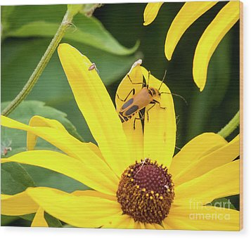 Wood Print featuring the photograph Goldenrod Soldier Beetle by Ricky L Jones
