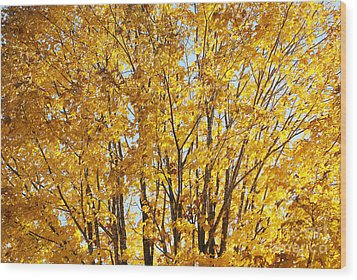 Goldenyellows Wood Print by Aimelle