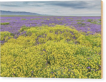 Wood Print featuring the photograph Goldfield And Phacelia by Marc Crumpler