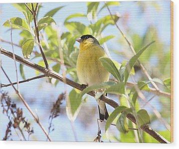 Goldfinch In Spring Tree Wood Print by Carol Groenen