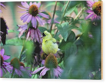 Goldfinch On Coneflowers Wood Print