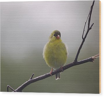 Wood Print featuring the photograph Goldfinch Puffball by Susan Capuano