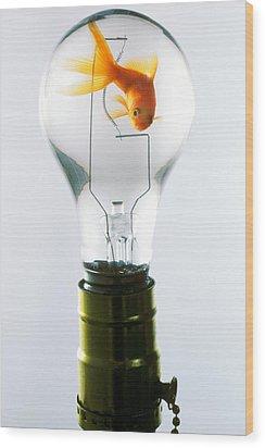 Goldfish In Light Bulb  Wood Print by Garry Gay