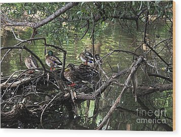 Gone Duck Hunting Wood Print