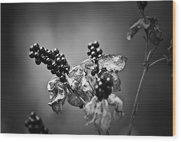 Gone To Seed Blackberry Lily Wood Print by Teresa Mucha