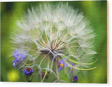 Gone To Seed Wood Print by Marty Koch