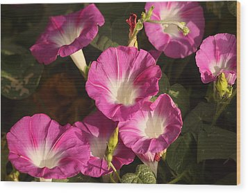 Wood Print featuring the photograph Good Morning, Glory by Sheila Brown