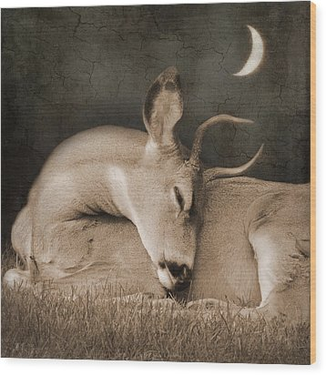 Wood Print featuring the photograph Goodnight Deer by Sally Banfill
