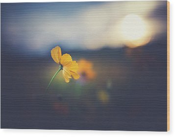 Wood Print featuring the photograph Goodnight Sun by Shane Holsclaw