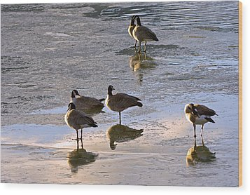 Goose Ice Refections Wood Print by James Steele