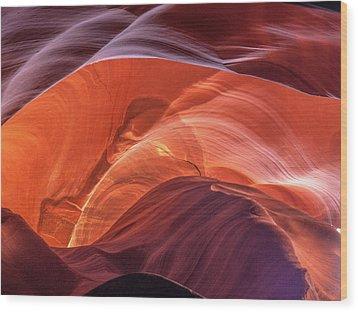Goose In Antelope Wood Print