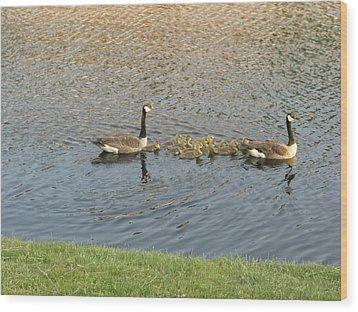 Goose Pond 1 Wood Print by Nancy Ferrier