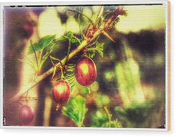 Wood Print featuring the photograph Gooseberry Fool by Isabella F Abbie Shores FRSA