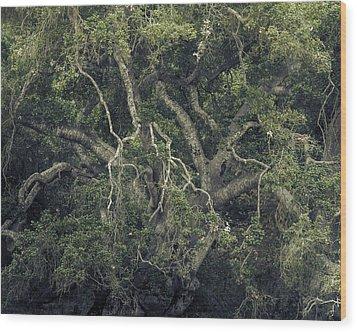 Wood Print featuring the photograph Gordian Oak by Alexander Kunz