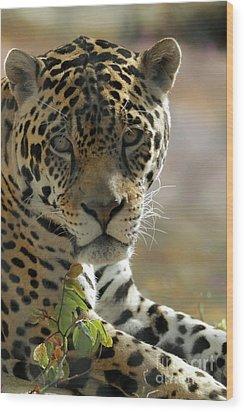 Gorgeous Jaguar Wood Print by Sabrina L Ryan