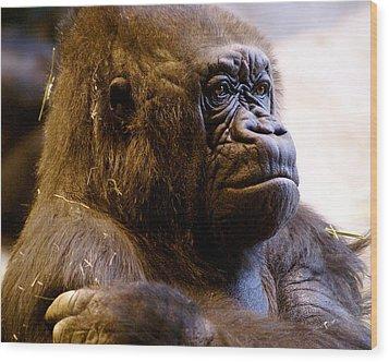 Gorilla Headshot Wood Print by Sonja Anderson