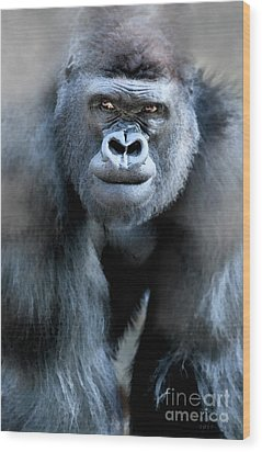 Gorilla In The Mist Large Canvas Art, Canvas Print, Large Art, Large Wall Decor, Home Decor Wood Print by David Millenheft